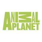 kanal-animal-planet